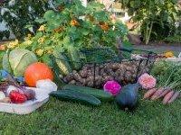 Pourquoi pas des jardins familiaux