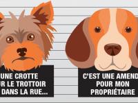 Déjections canines : Le coupable, c'est vous !