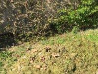 Dépots sauvages de déchets : des comportements inadmissibles